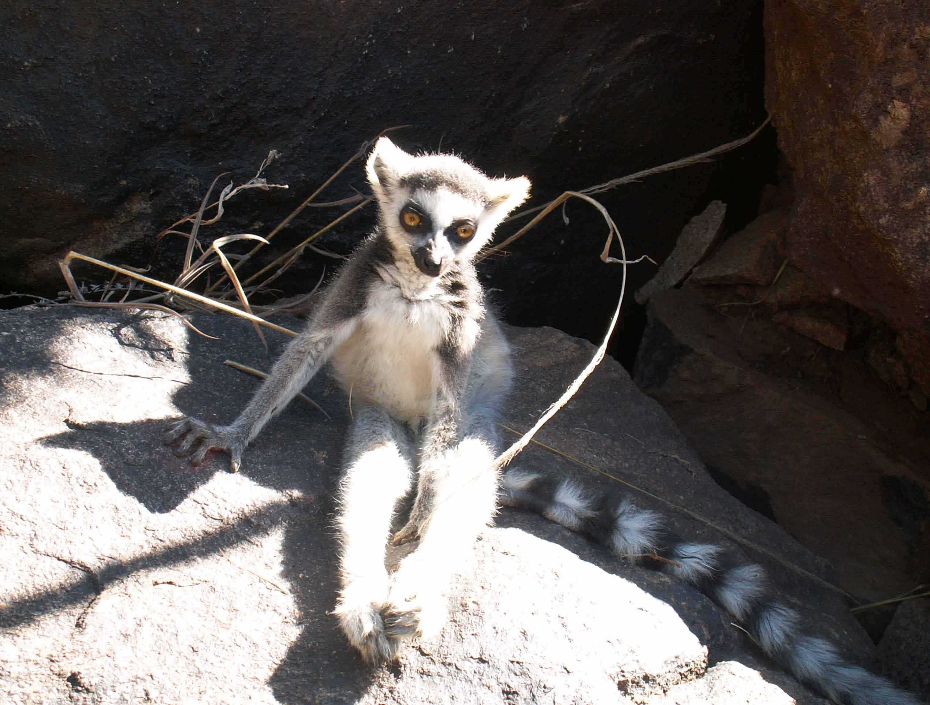 Lemurs'Park - Maki ou Catta