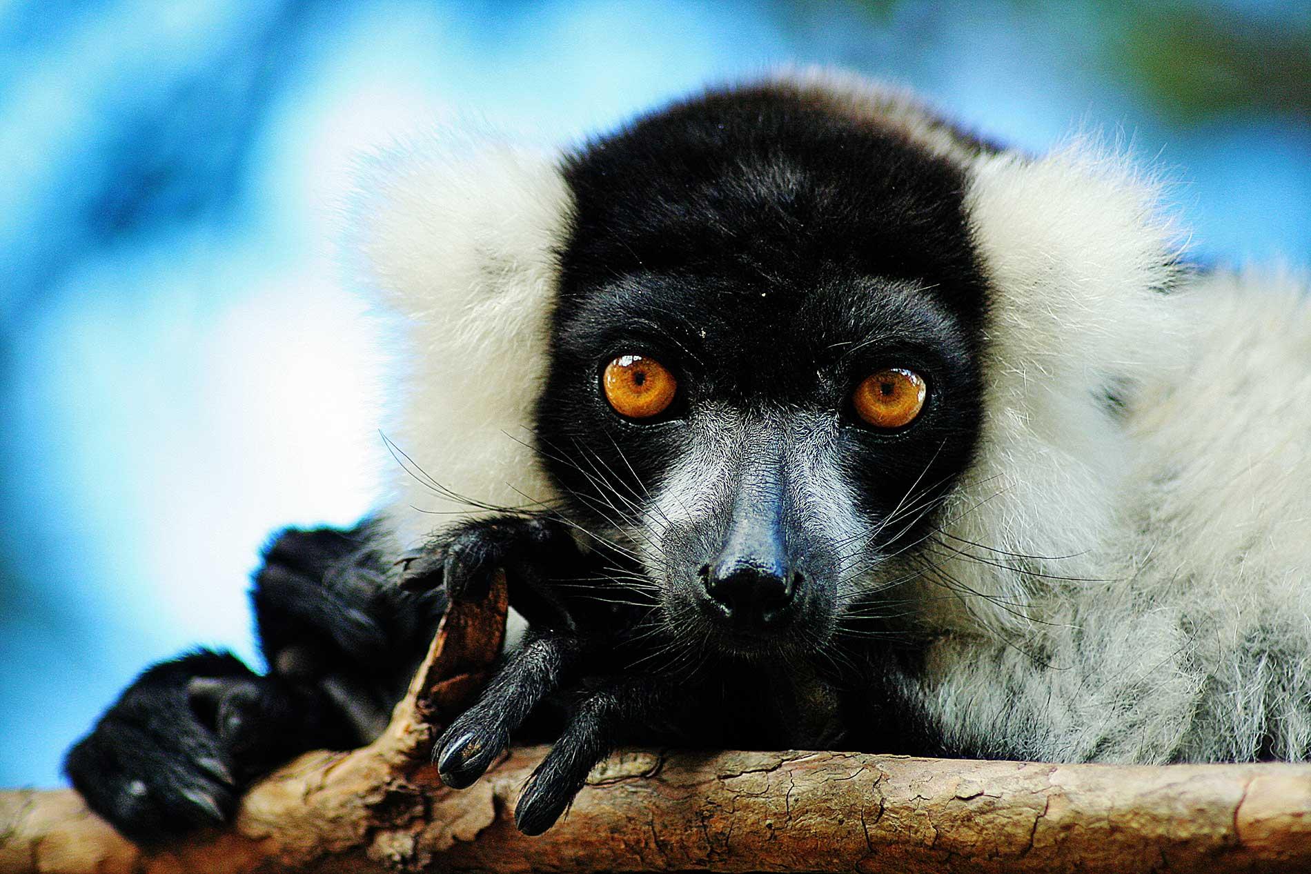 lemurspark antananarivo Park réserve lémurien